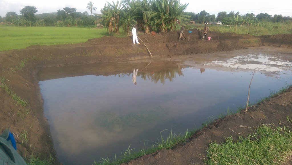 Fish farming for Fish farming at home